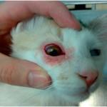 glaznay-patologiy-posle-operacii