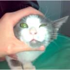 Открытый перелом нижней челюсти у кошки