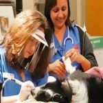 veterinarnay-stomatologiy