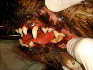 zubnoi-kamen