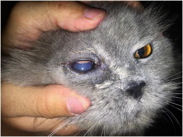 Интраокулярное протезирование глазного яблока